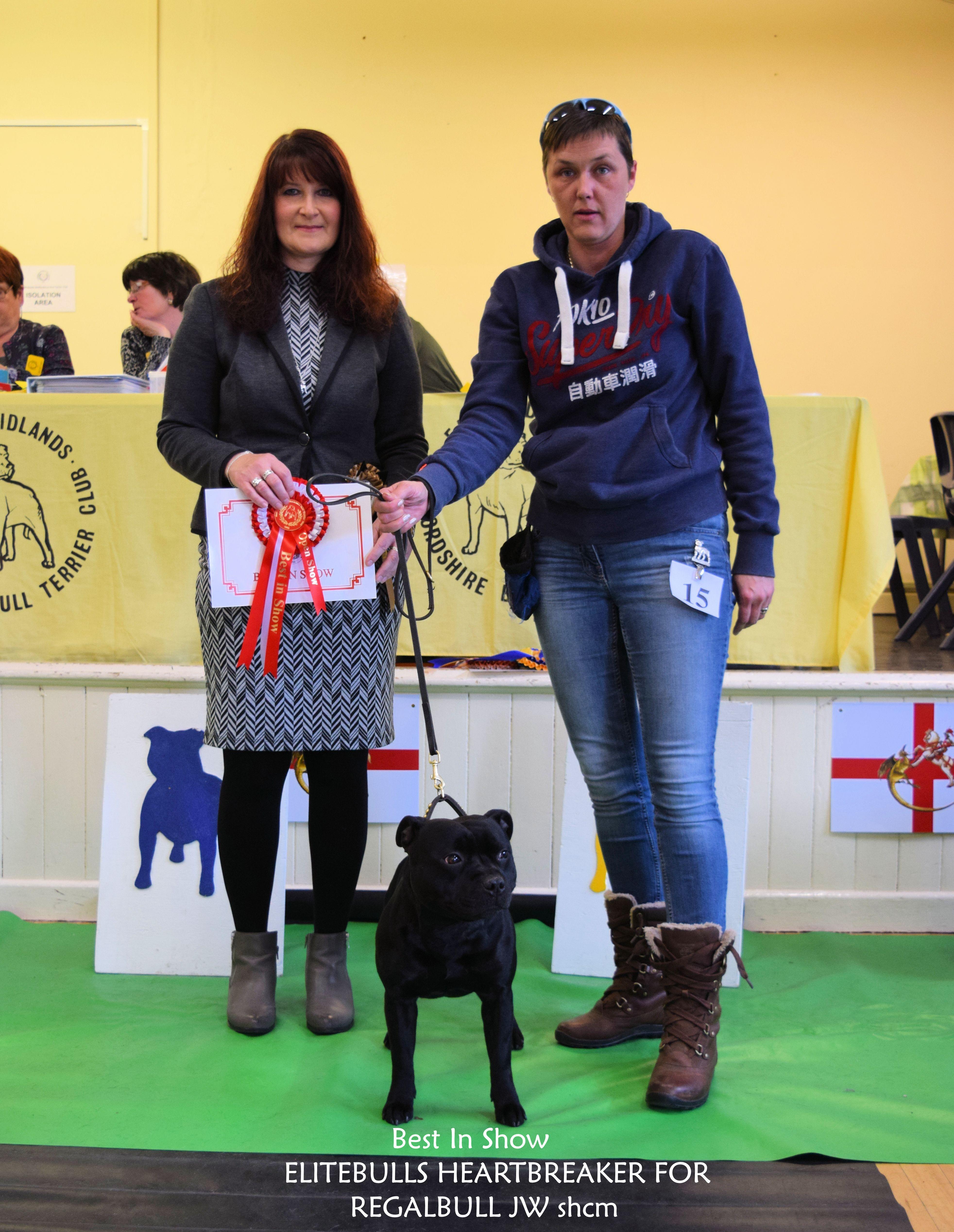 Best Dog Open Show 2016